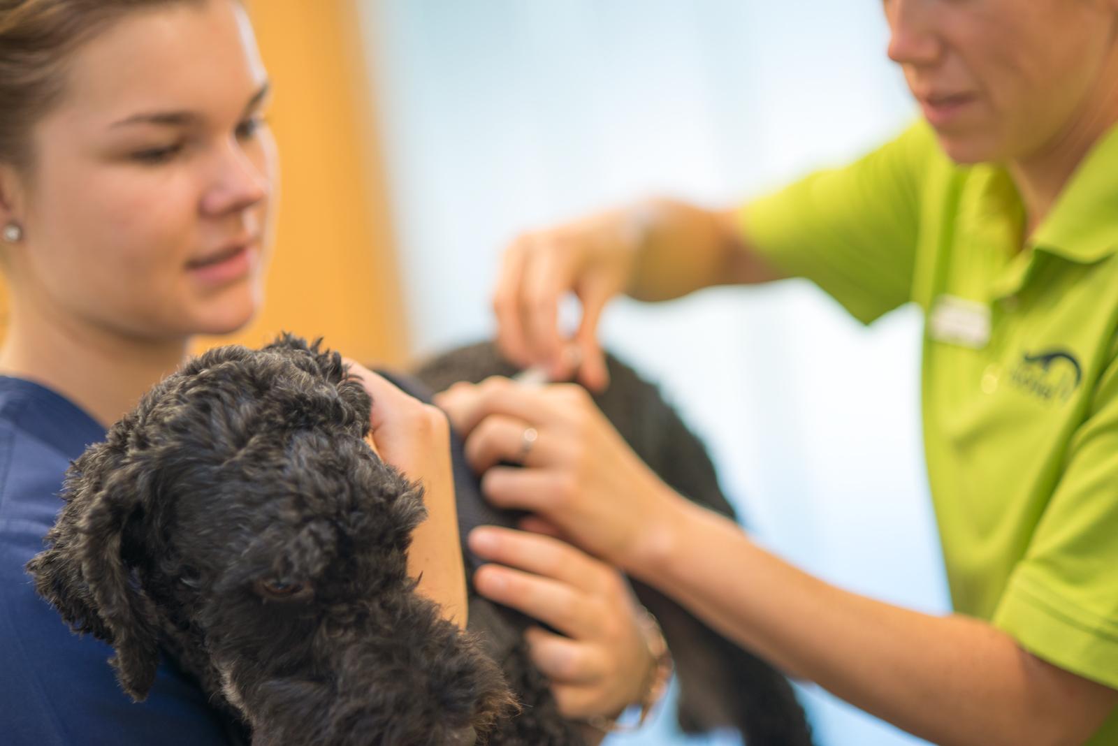 Tierarztpraxis für Kleintiere Region Bern