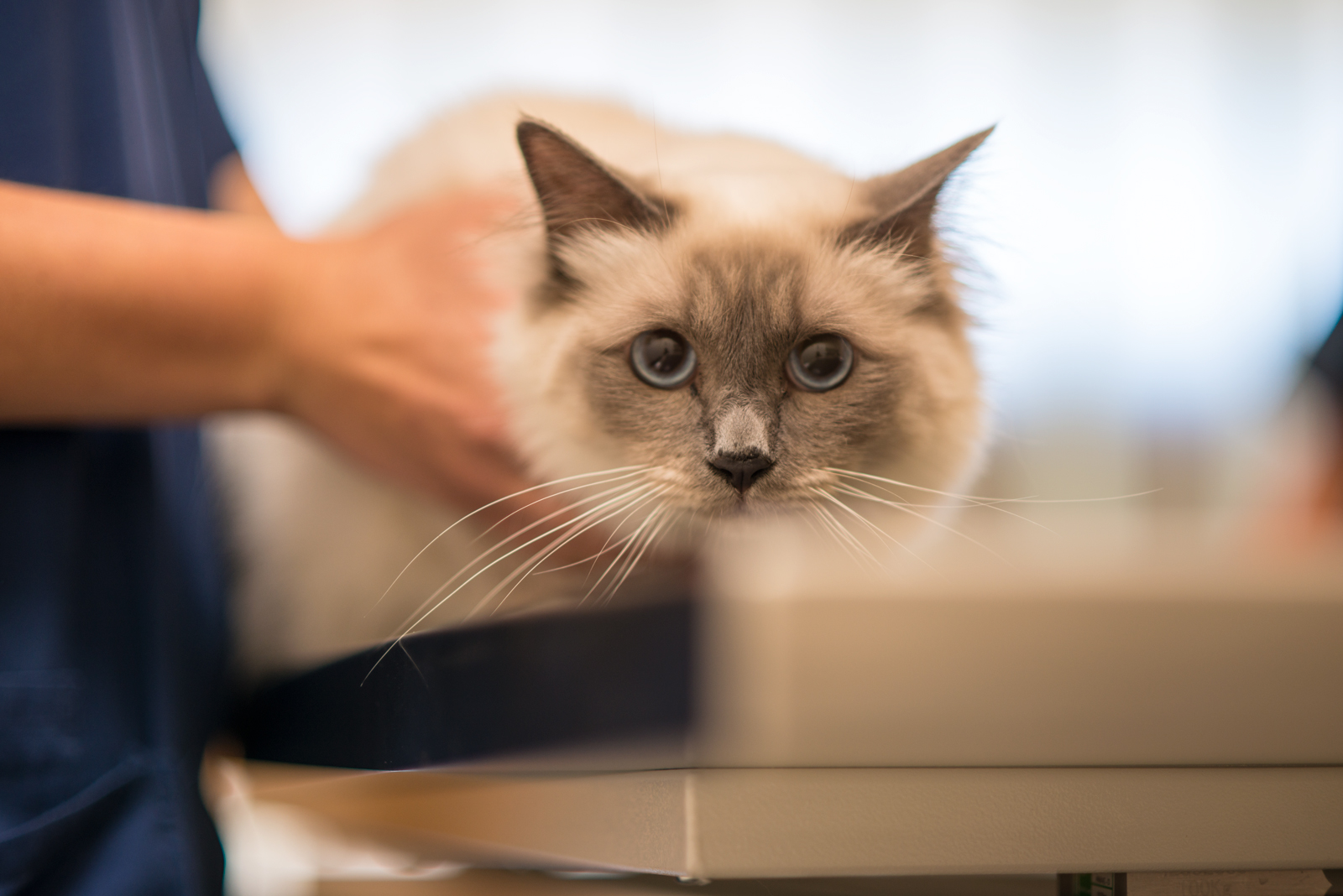 Katzen Tierarztpraxis DUOVet Bern