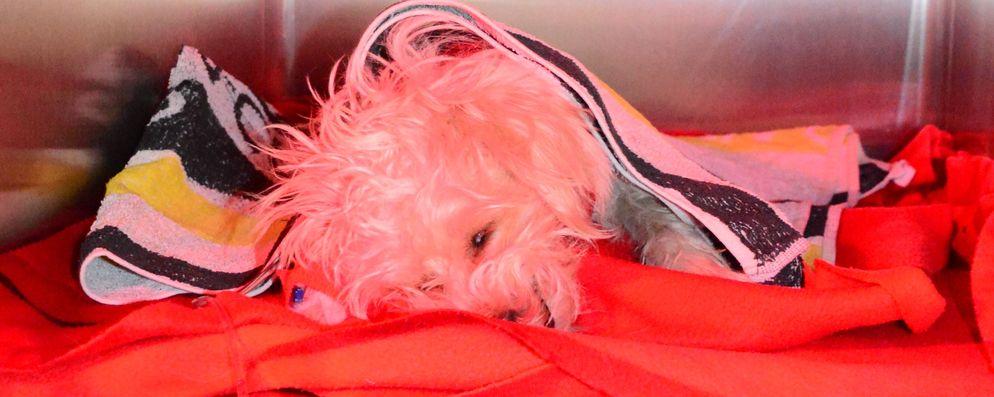 Kiki in der Aufwachphase nach der Kastration