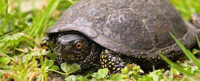Schildkröte DUOVet, Heimtiere DUOVet