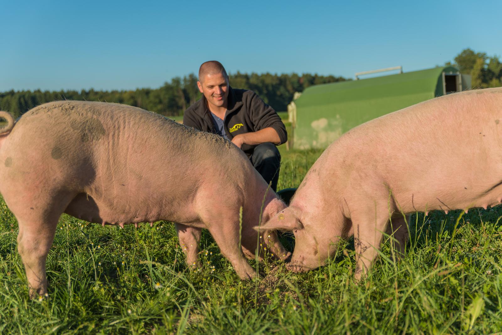 Tierarztpraxis für Schweine in der Region Bern