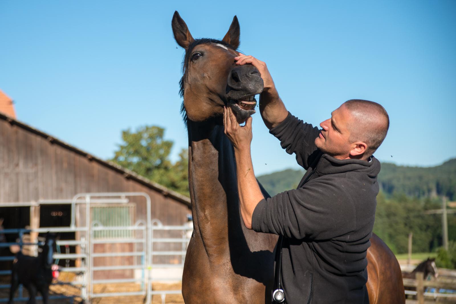 Tierarztpraxis Pferde Bern DUOVet