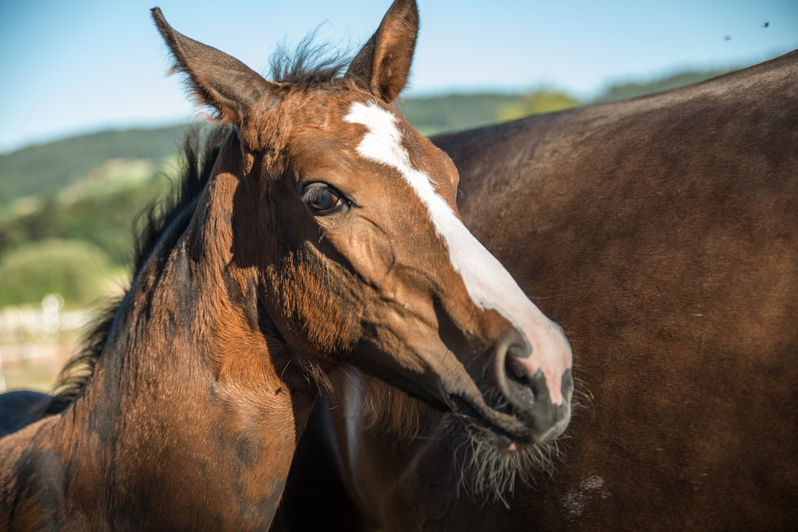 Pferde und Fohlen DUOVet Bern