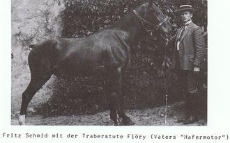 Tierarzt mit Pferd Säriswil bei Bern
